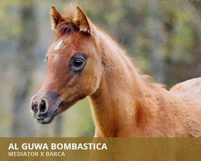 Al Guwa Bombastica