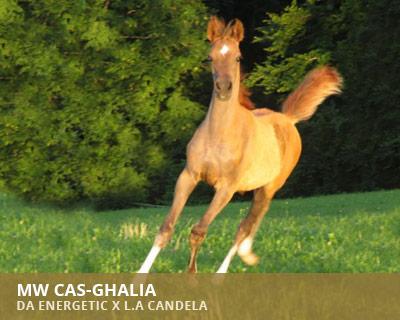 Al Guwa Cas-Ghalia