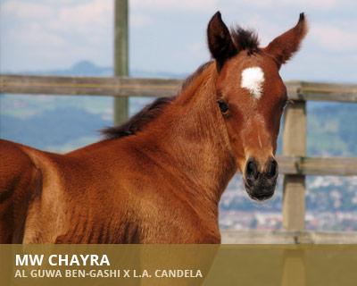 Al Guwa Chayra