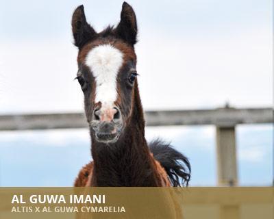 Al Guwa Imani