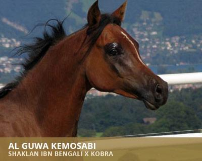 Al Guwa Kemosabi