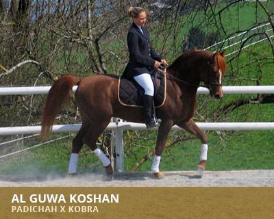 Al Guwa Koshan