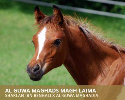 Al Guwa Maghads Magh-Laima