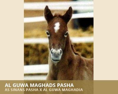 Al Guwa Maghads Pasha
