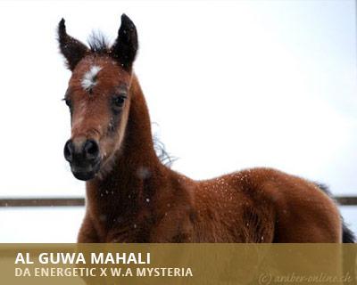 Al Guwa Mahali