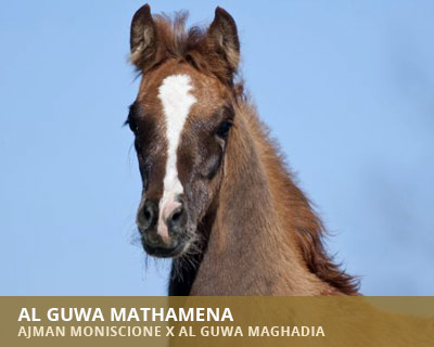 Al Guwa Mathamena