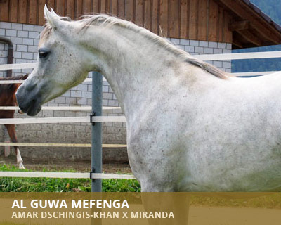 Al Guwa Mefenga