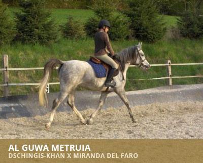 Al Guwa Metruia
