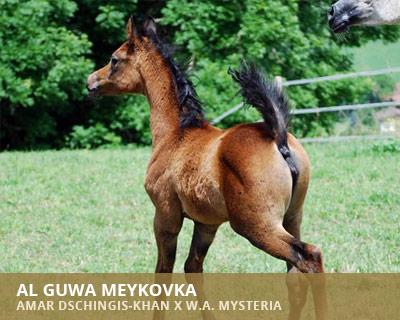 Al Guwa Meykovka