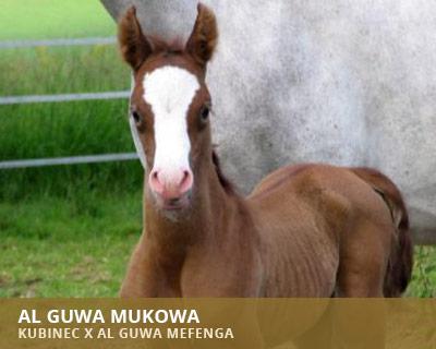 Al Guwa Mukowa