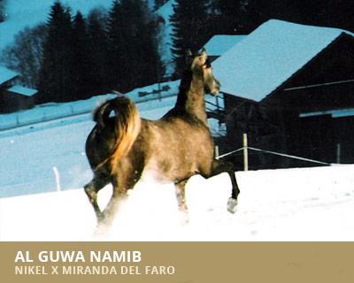 Al Guwa Namib