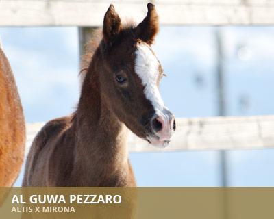 Al Guwa Pezzaro