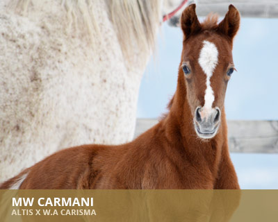 MW Carmani