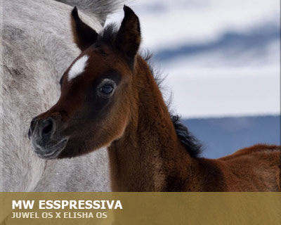 MW Expressiva