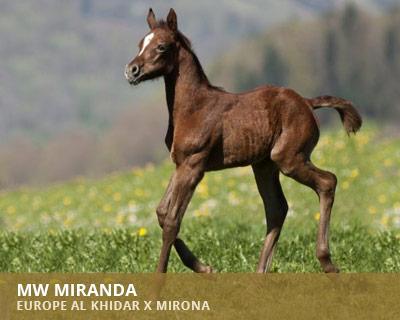 MW Miranda