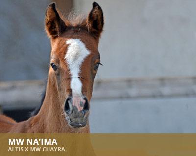 MW Naima