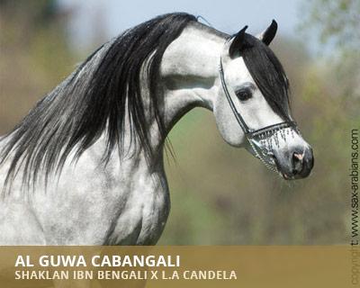 Al Guwa Cabangali