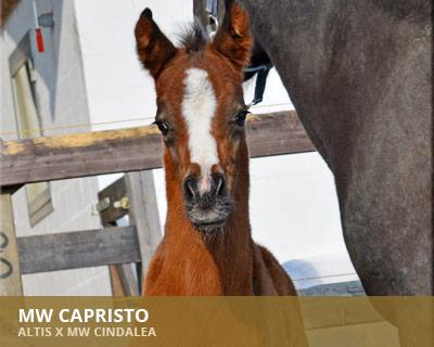 MW Capristo