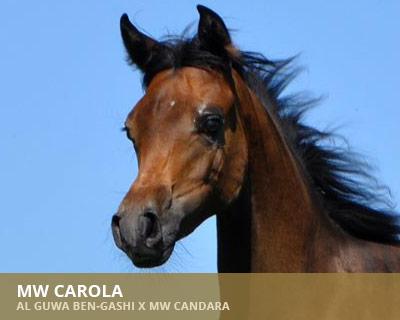 MW Carola