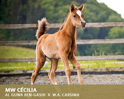 MW Cécilia