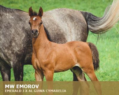 MW Emorov