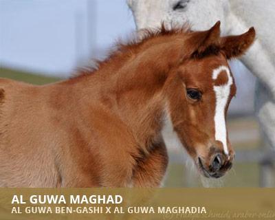 Al Guwa Maghadia