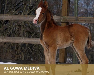 Al Guwa Mediva