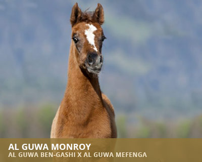 Al Guwa Monroy