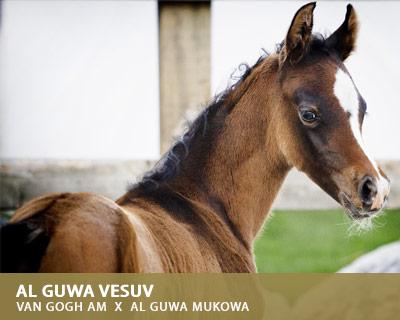 Al Guwa Vesuv