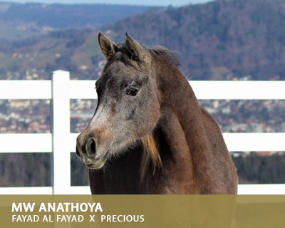 Anathoya