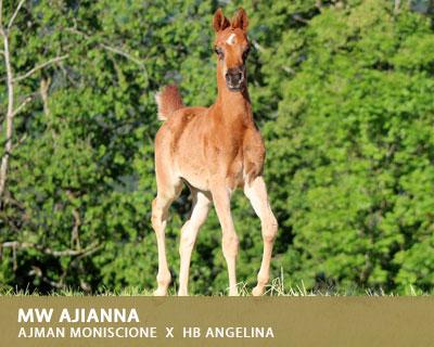 MW Ajianna